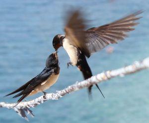 czy-wiecie-jak-wygladaja-ptaki-o-ktorych-jest-ta-piosenka-fot-debbiemoussxchu