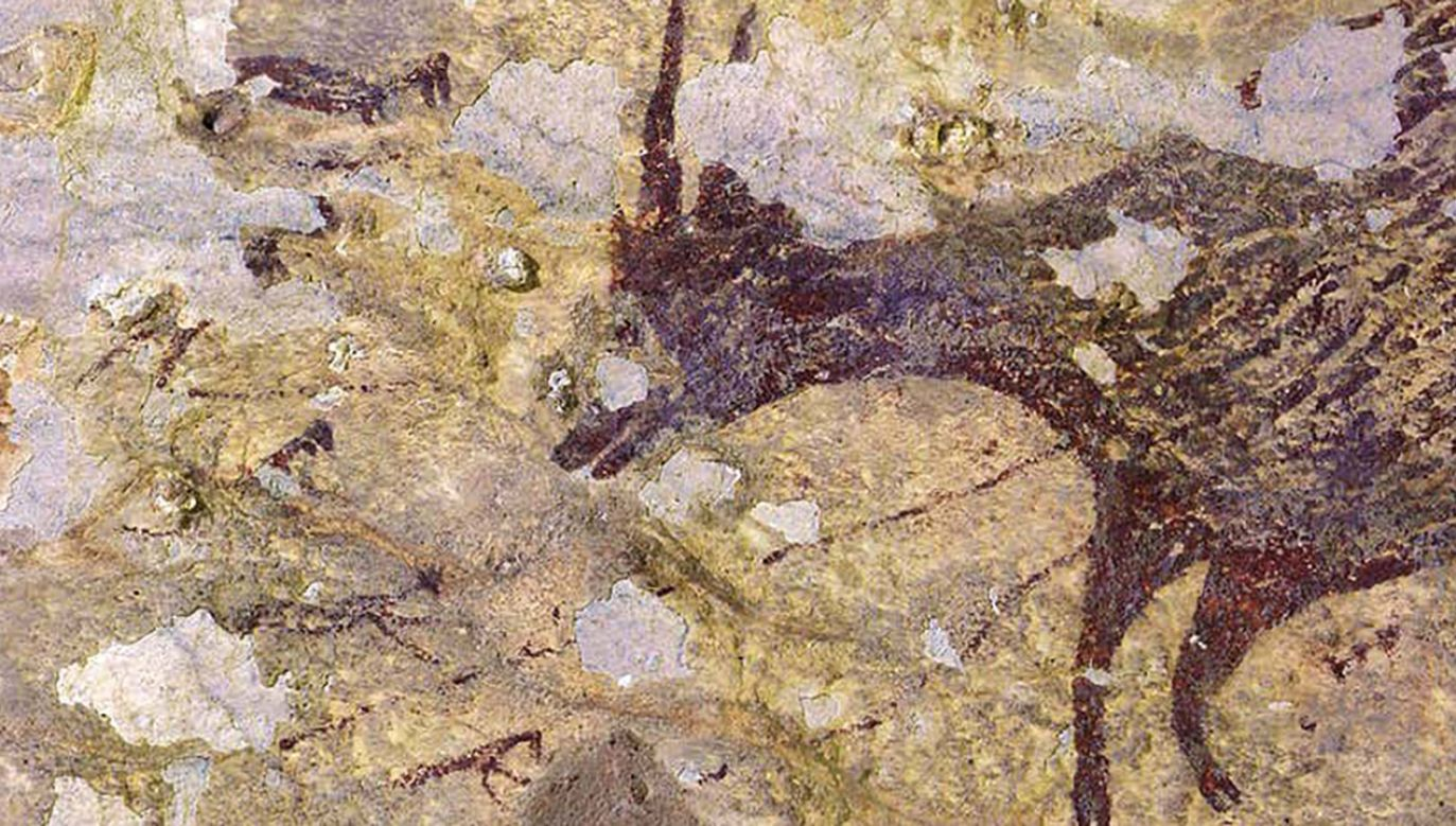 Najstarsze rysunki naskalne liczą prawie 44 tys. lat. (fot. Ratno Sardi/Griffith University)