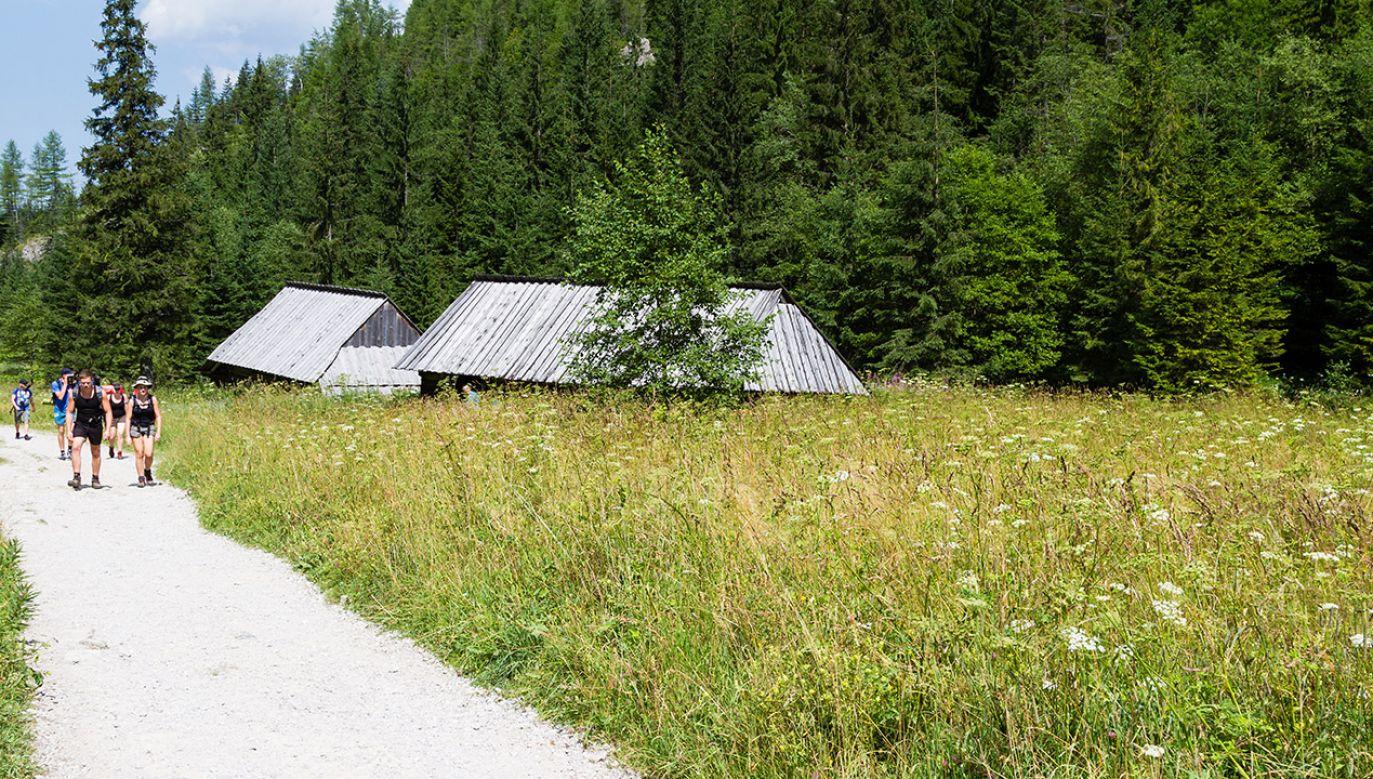 Szczątki znajdowały się około 100 metrów od popularnego szlaku (fot. Shutterstock/Milosz Maslanka)