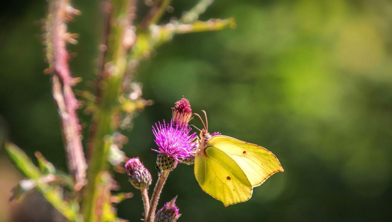 Niektóre rośliny warto zasadzić lub przynajmniej mieć w doniczce (fot. pixabay.com/analogicus)