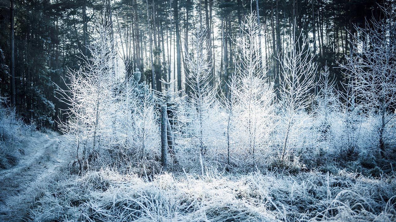 Jak zmieni się pogoda w najbliższych dniach? (fot. Forum/Daniel Dmitriew)
