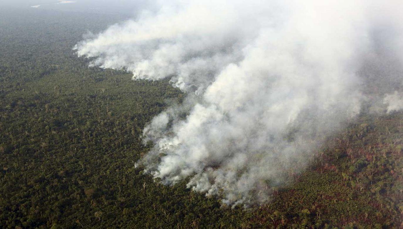 W porównaniu z tym samym okresem w 2018 roku nastąpił wzrost liczby pożarów o 84 procent (fot. REUTERS/Paulo Whitaker)