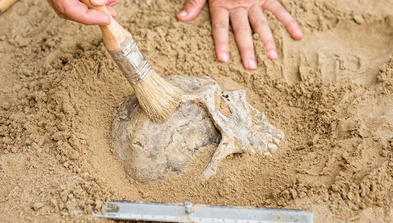 W kościach zapisane jest chemicznie ostatnie 10-15 lat naszego życia (fot. Shutterstock/Microgen)