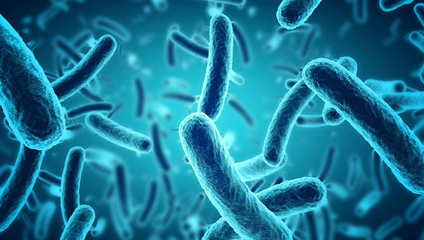 Organizmy prokariotyczne, czyli archeony i bakterie, są obecne na wszystkich kontynentach (fot. Shutterstock/paulista)