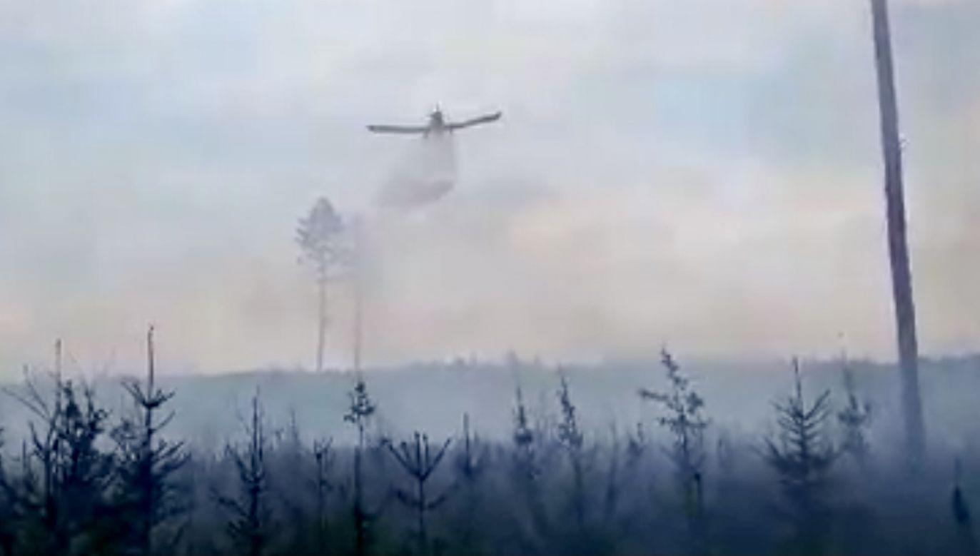 Z ogniem walczyło m.in. 10 zastępów straży pożarnej (fot. FB/Nadleśnictwo Włodawa, LP)