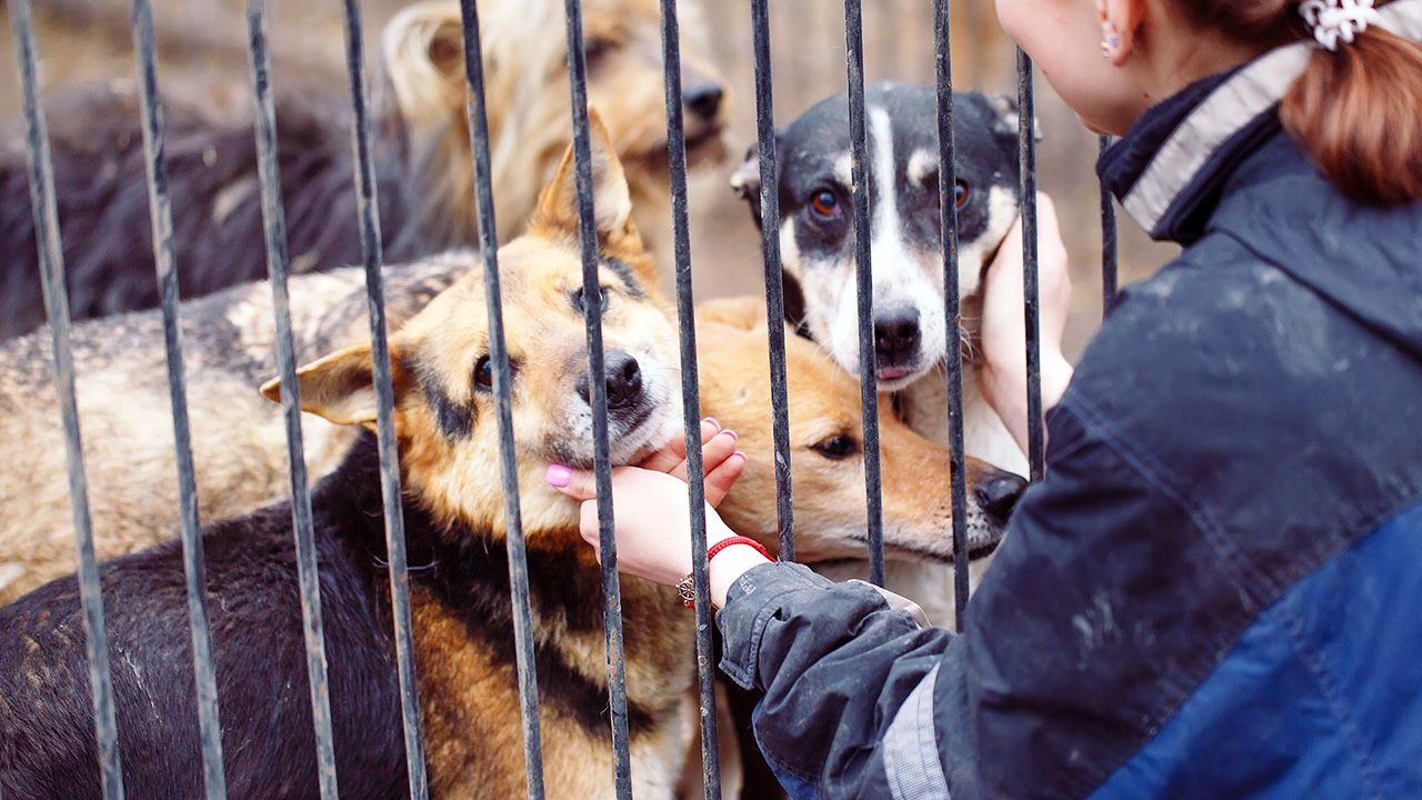 """""""Zapraszam przedstawicieli schroniska dla zwierząt »Na Paluchu« na spotkanie"""" – napisał w mediach społecznościowych szef rządu (fot. Shuttersock/ David Tadevosian)"""