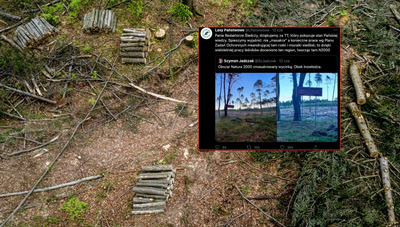 Rzecznik LP mówi o ochronie lasów w Polsce (fot. Dominika Zarzycka/NurPhoto via Getty Images)