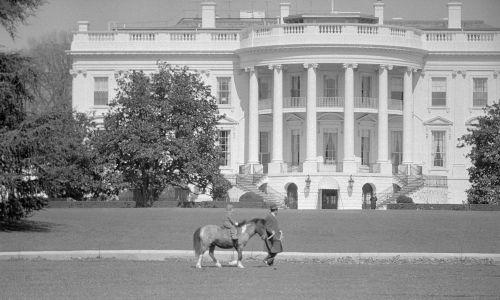 Marzec 1962 r. W asysycie secret service Caroline Kennedy jeździ dziś na kucyku Macaroni na terenie Białego Domu. Fot. Getty Images