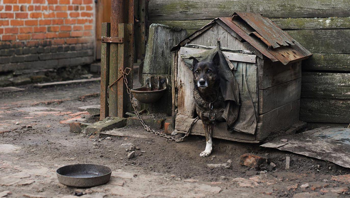 Sejm uchwalił w piątek rano nowelę ustawy o ochronie zwierząt, która m.in. zakazuje hodowli zwierząt na futra i wprowadza ograniczenia uboju rytualnego (fot. Shutterstock/vladee)