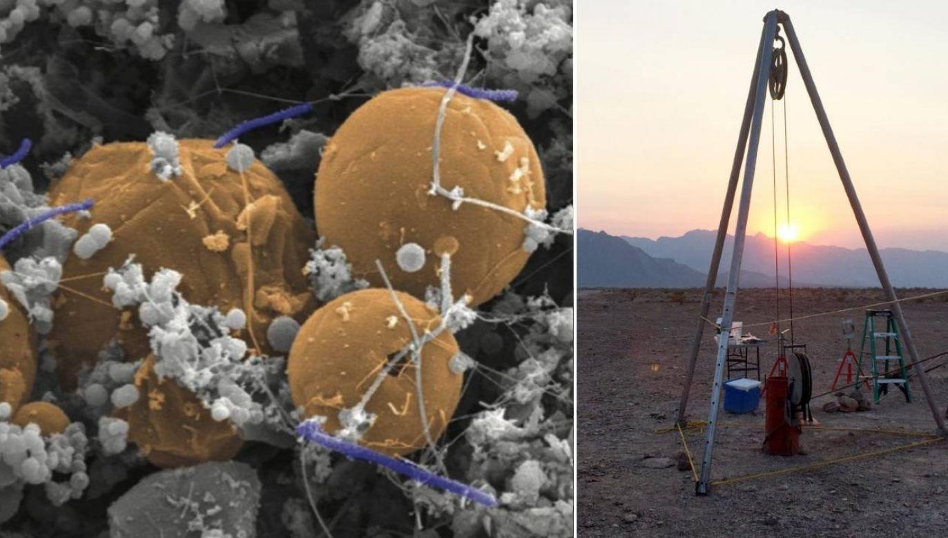 Mikroorganizm znaleziono na głębokości około 3 km (fot. Duane Moser/Desert Research Institute/Luc Riolon/Deep Carbon Observatory)