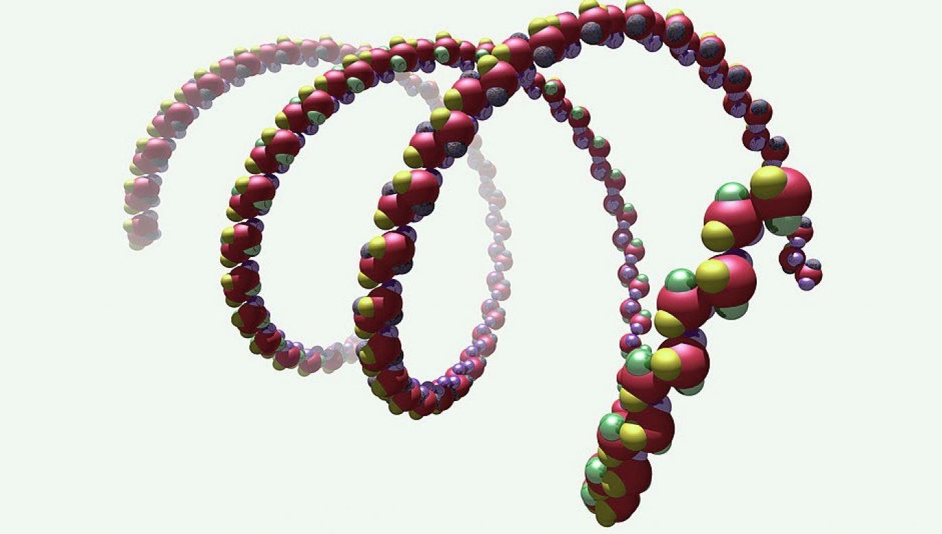 Badacze zbadali jak taka forma DNA powstaje i jaką rolę pełni (fot. BSIP/UIG Via Getty Images, zdjęcie ilustracyjne)