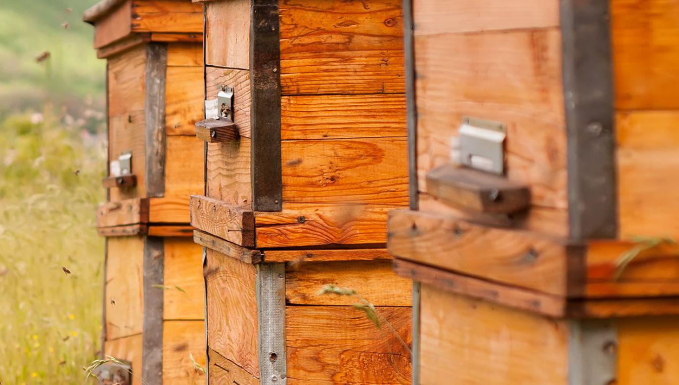 Właściciele pasieki szacują poniesione straty na ok. 5 tys. złotych (fot. Shutterstock/kosolovskyy)
