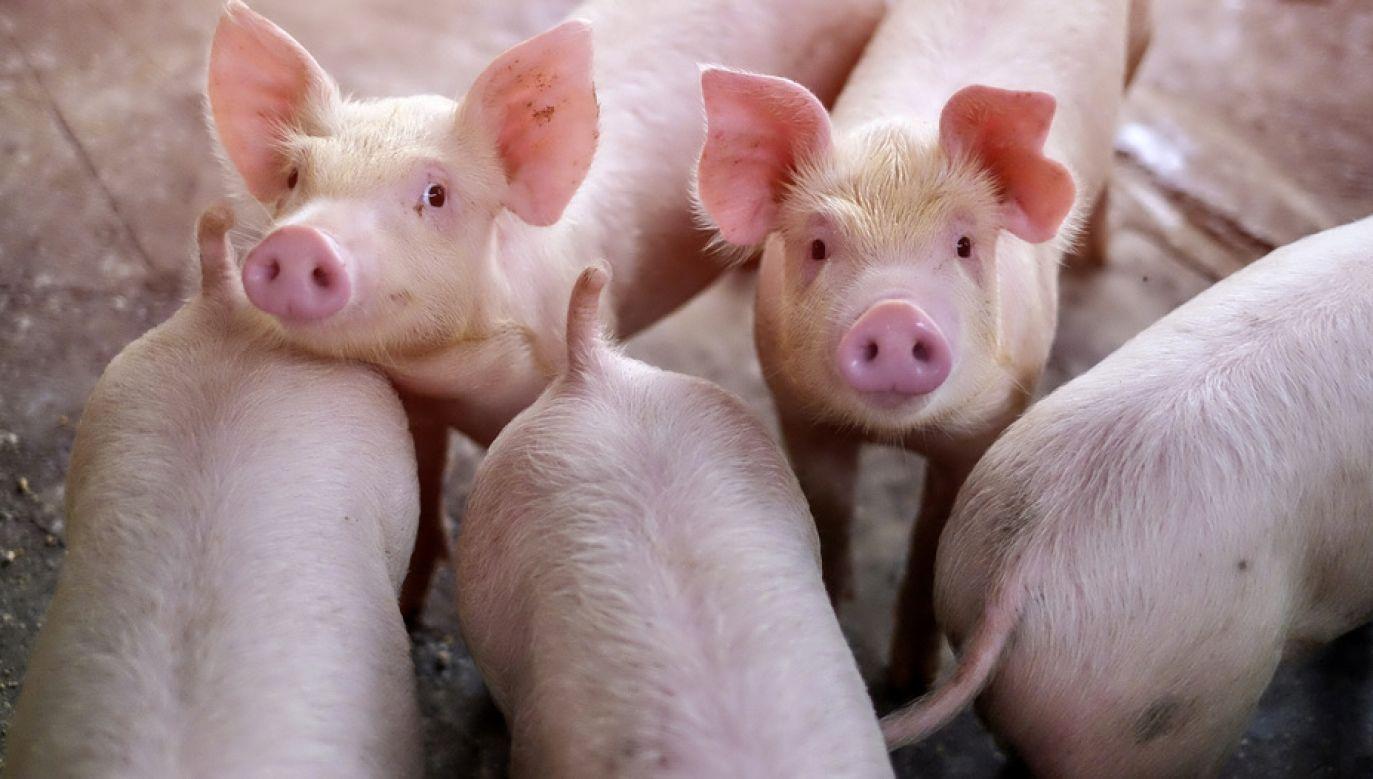 Oskarżeni nie potrafili wyjaśnić, gdzie się podziały brakujące zwierzęta (fot. Shutterstock/krumanop)