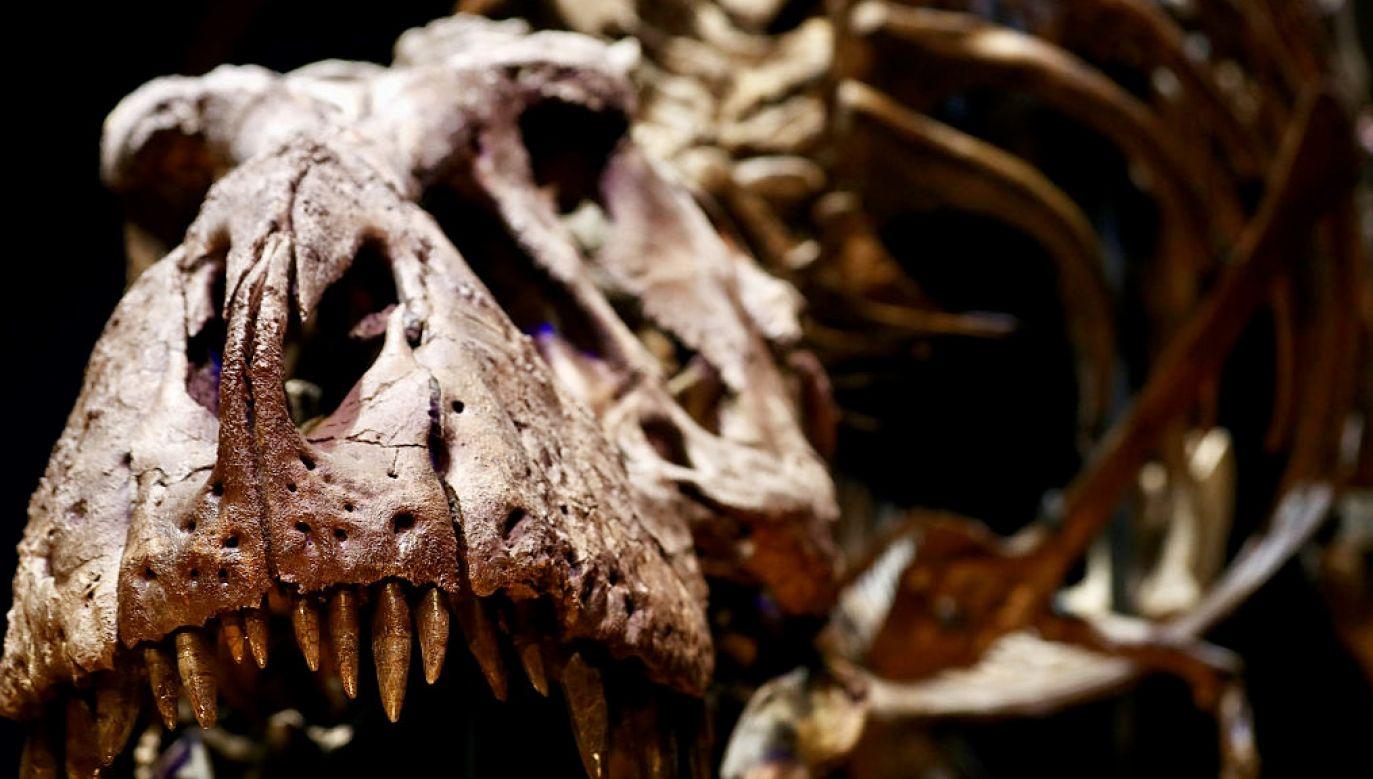 26 lutego obchodzony jest Dzień Dinozaura (fot. D.Mouhtaropoulos/Getty Images, zdjęcie ilustracyjne)