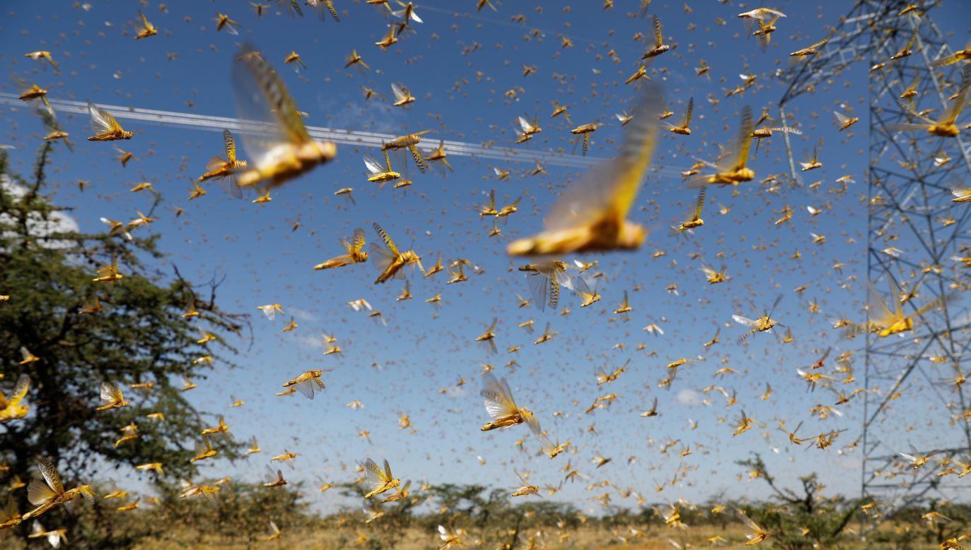 Rolnicy mówią już o katastrofie biologicznej (fot. Reuters/Baz Ratner)