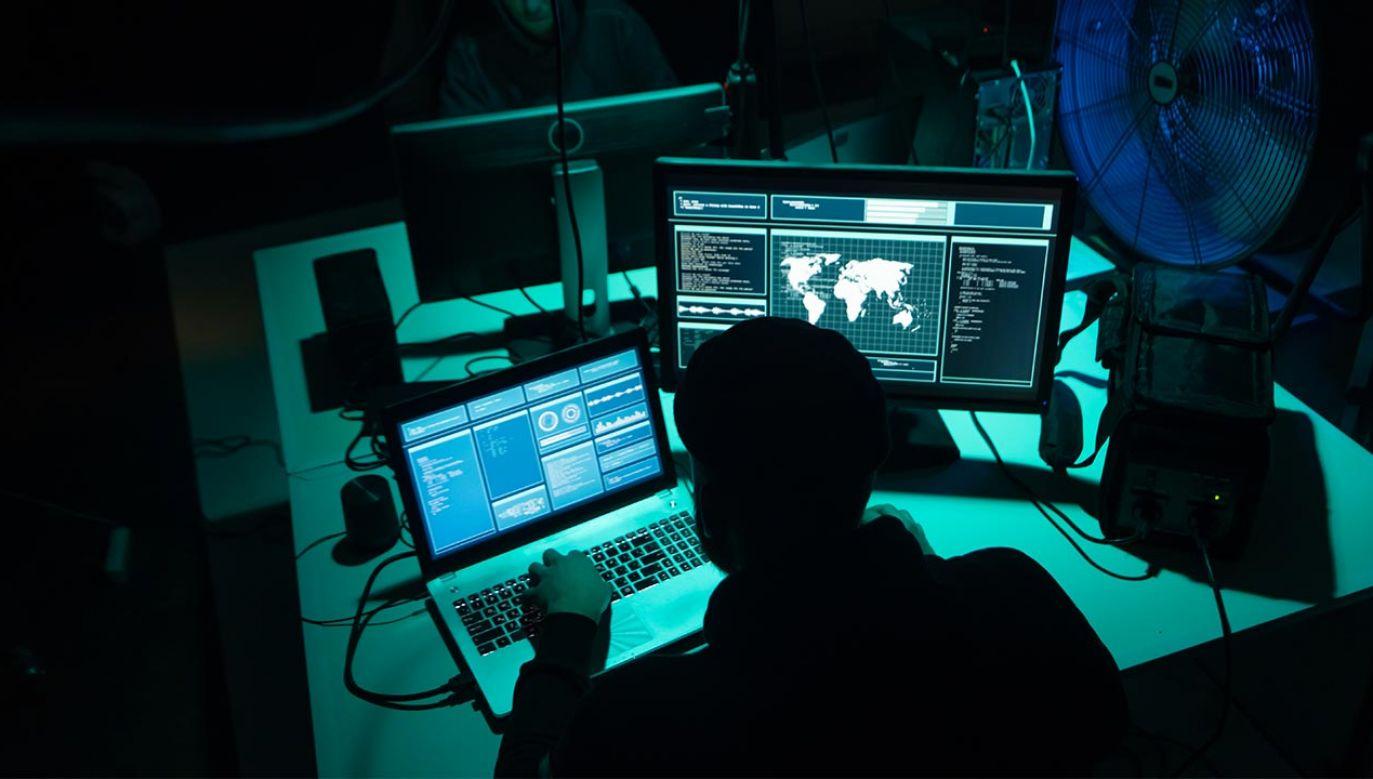 Policjanci zarekwirowali także 6,5 mln dolarów w gotówce (fot. Shutterstock/Maksim Shmeljov)