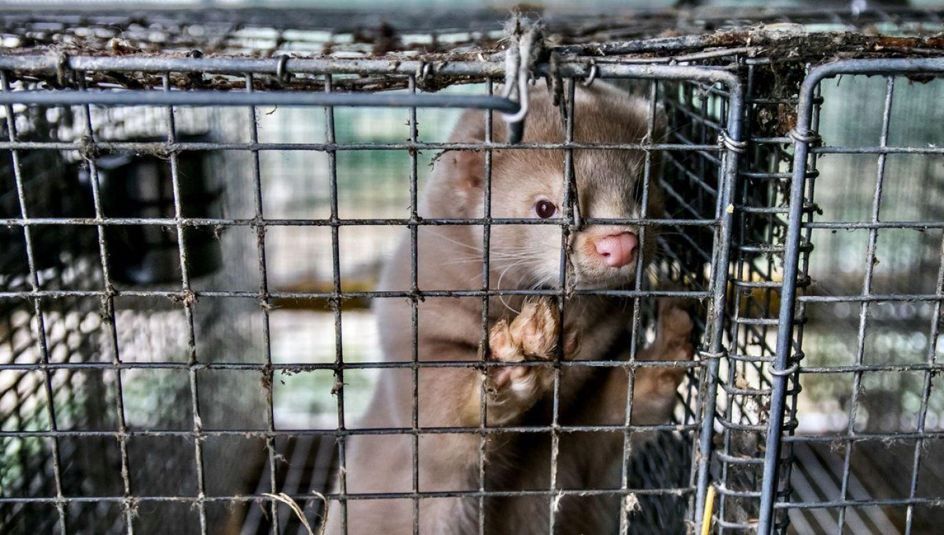 """Czołowe organizacje praw zwierząt zapowiedź tę nazwały """"historycznym zwycięstwem"""" (fot. Shutterstock)"""