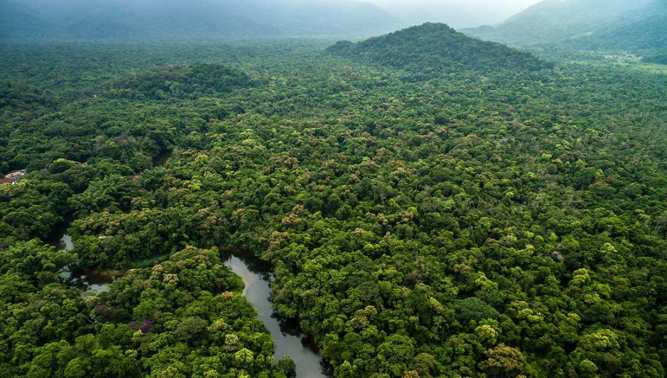 W ramach badania przeanalizowano też rośliny (fot. Shutterstock/Gustavo Frazao)