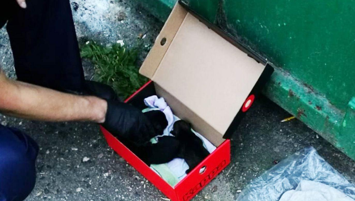 Policjanci uratowali wyrzucone do śmieci szczenięta (fot. Policja)