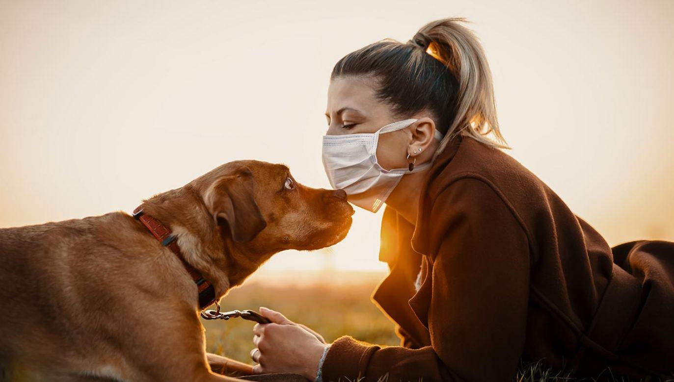 Nosy psów są 50 razy czulsze od ludzkich (fot. Shutterstock/MT-R)
