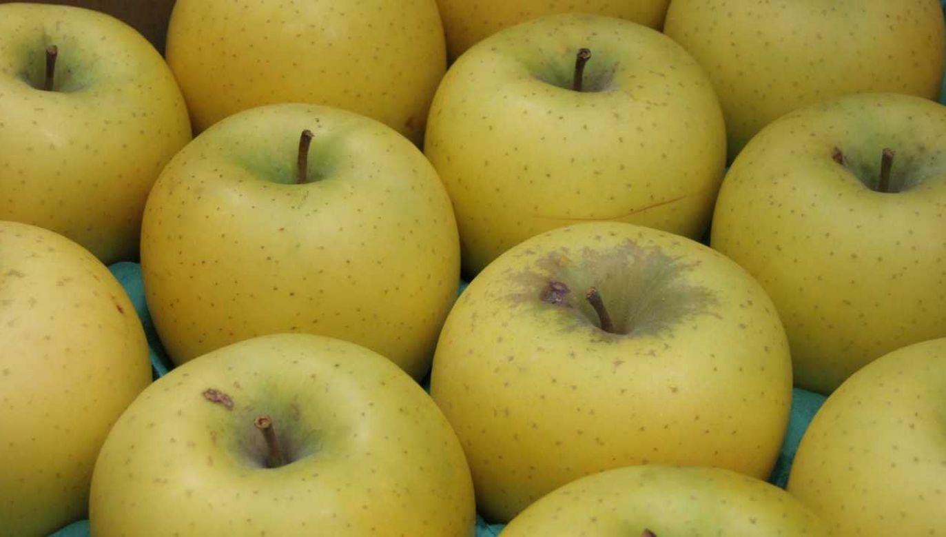 Odmiana Złote Shinano jest wykorzystywana między innymi w koszach delikatesowych (fot. Wiki 3.0/Sakurai Midori)