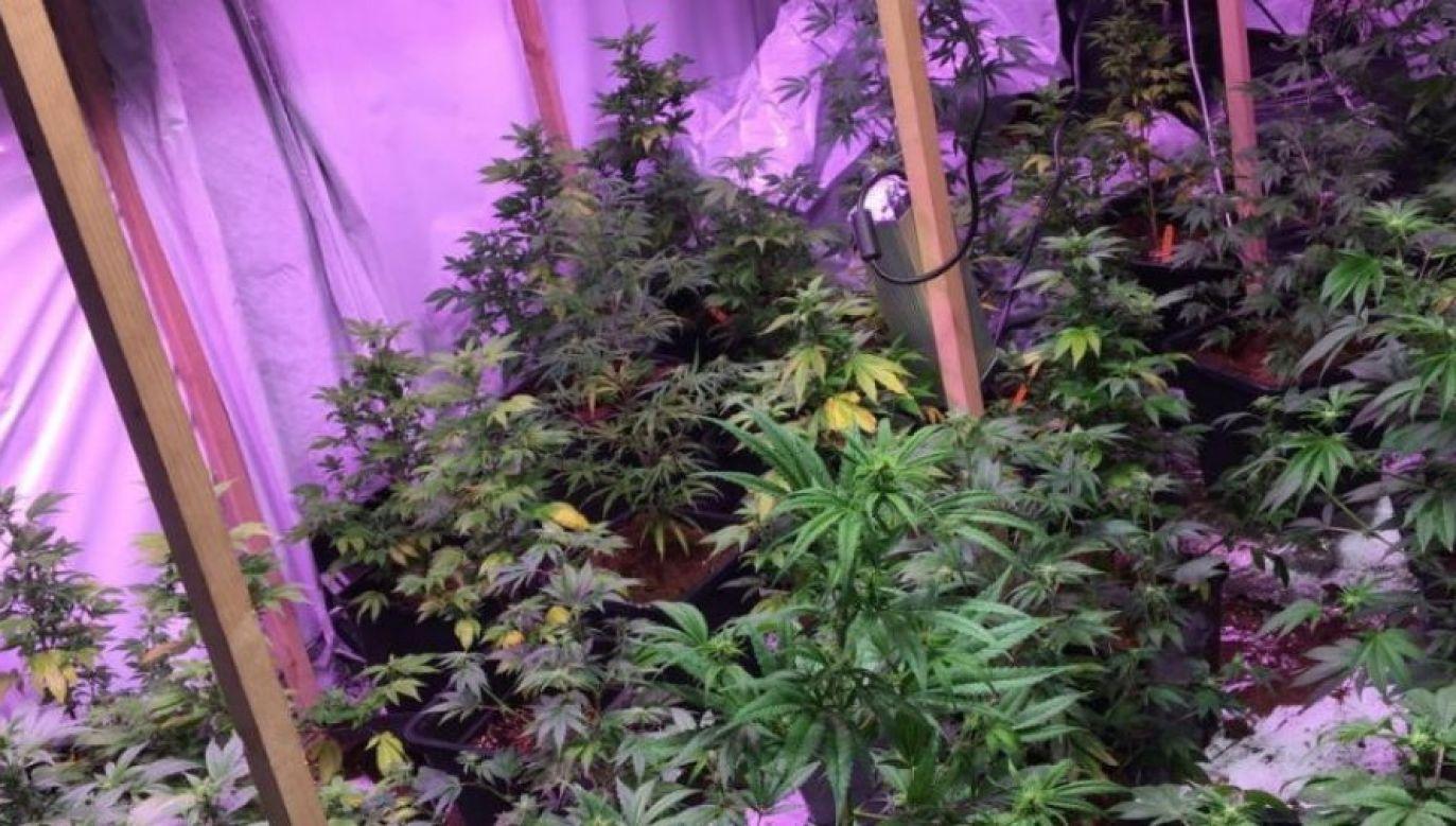 Na miejscu znaleziono 26 kg marihuany (ilustracja przykładowa; fot. policja)