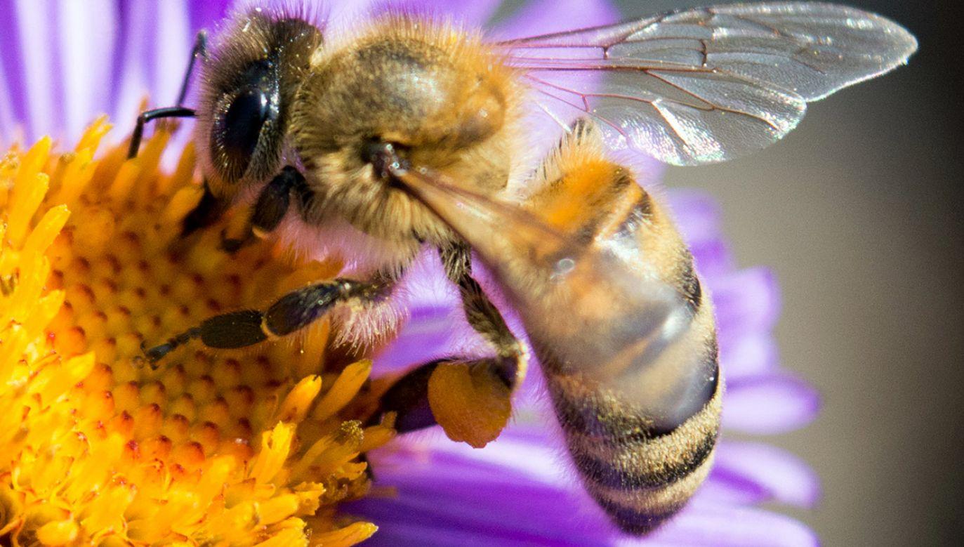 Dzikie pszczoły z Płocka mają swój hotel. (fot. Shutterstock/Mr. Background)