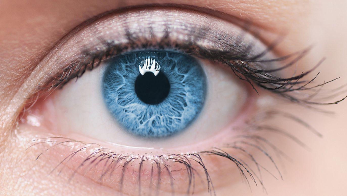 Naukowcy sprawdzili, co może przywrócić wzrok niewidomym (fot. shutterstock/Piotr Krzeslak)