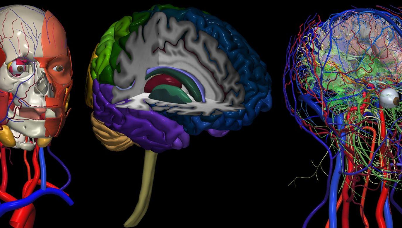 Mapa ludzkiego mózgu, głowa i szyja w 2953 częściach. Autorzy: WL Nowinski, BC Chua, TSL Thaung i SH Wut Yi. Fot. www.thieme.com/nowinski