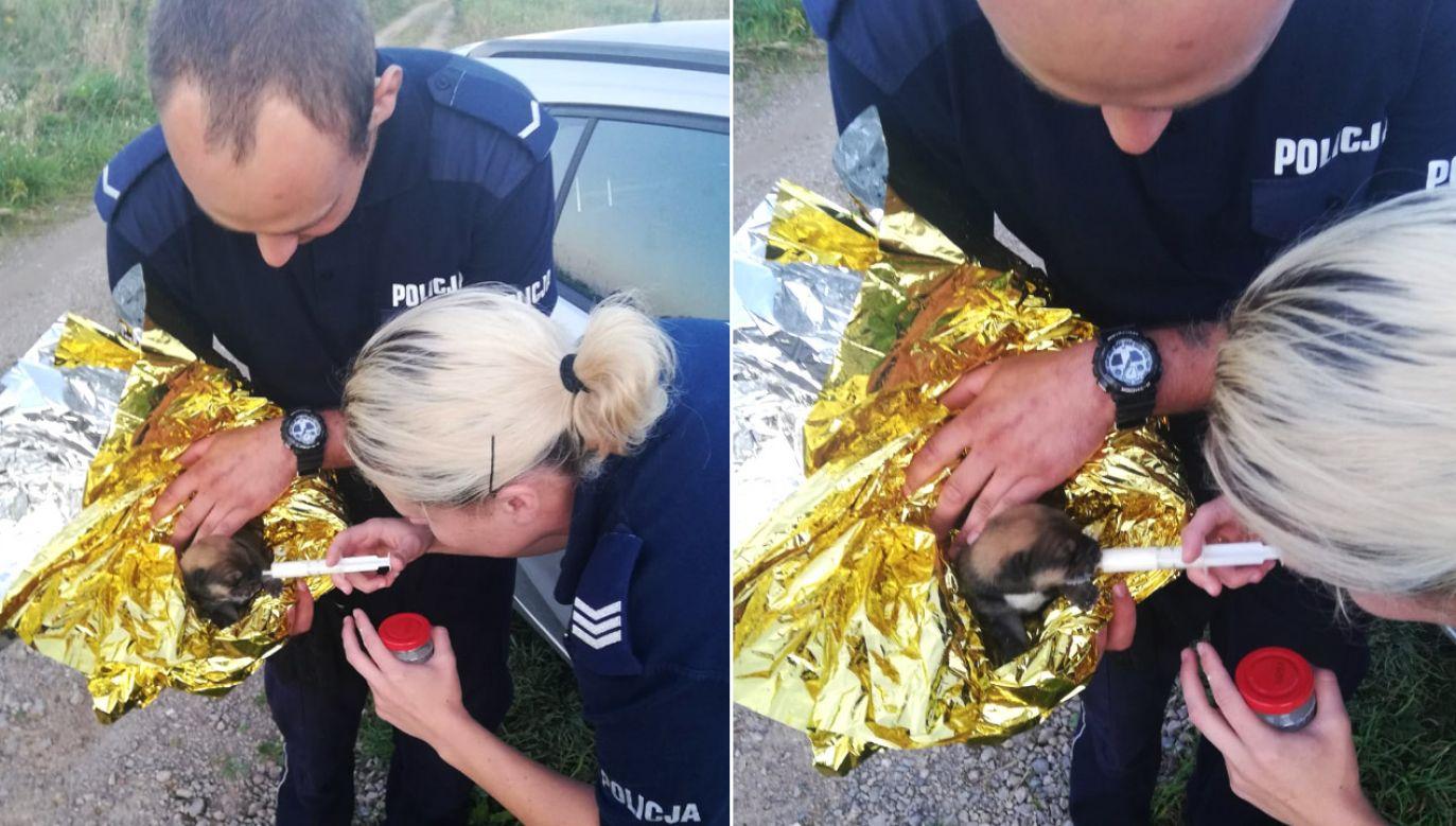 Zwierzaka zabrano na miejscowy posterunek (fot. TVP Info)
